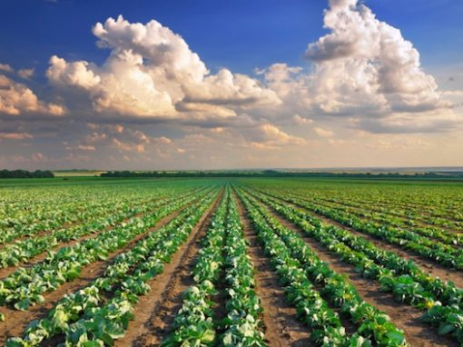 Analisi Terreni Agricoli